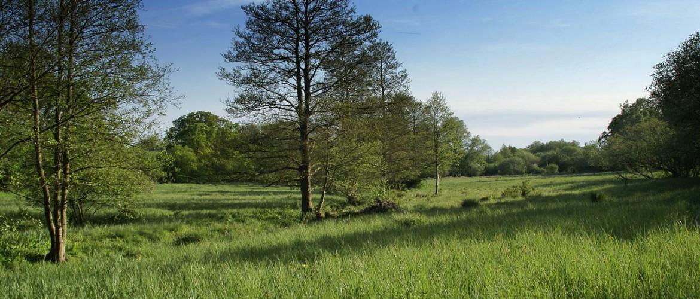 Jones' Mill Nature Reserve, Pewsey